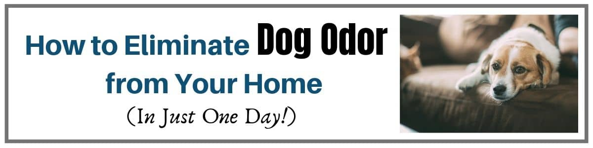 How to Eliminate Dog Odor