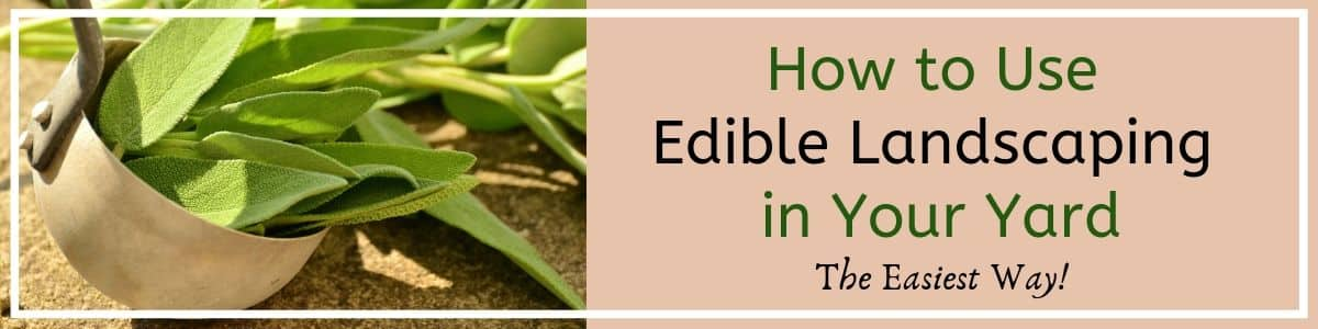 Edible Landscaping for your front or back yard. It's easy once you know how to do it and the whole family will have fun.