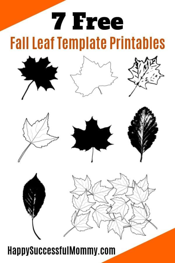 Fall Leaf Template for Maple and Beech leaves, perfect for all crafts