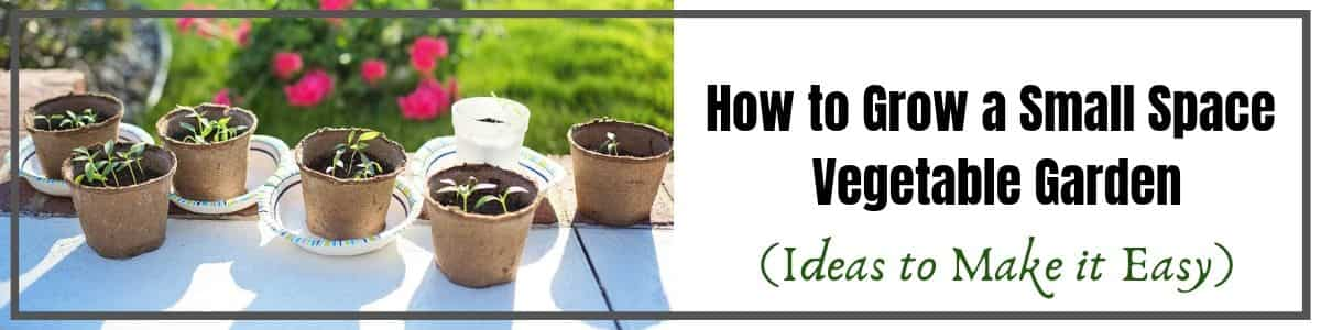 Small Space Vegetable Garden Ideas to help you grow in your apartment or small back yard